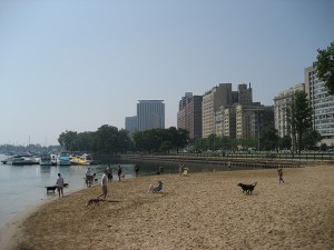 dog-beach-chicago